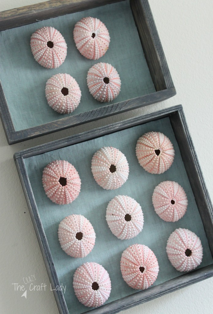 DIY Sea Urchin Specimen Art