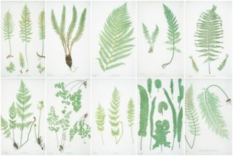 Ultimate Free Botanical Prints Guide