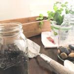 diy herb garden supplies