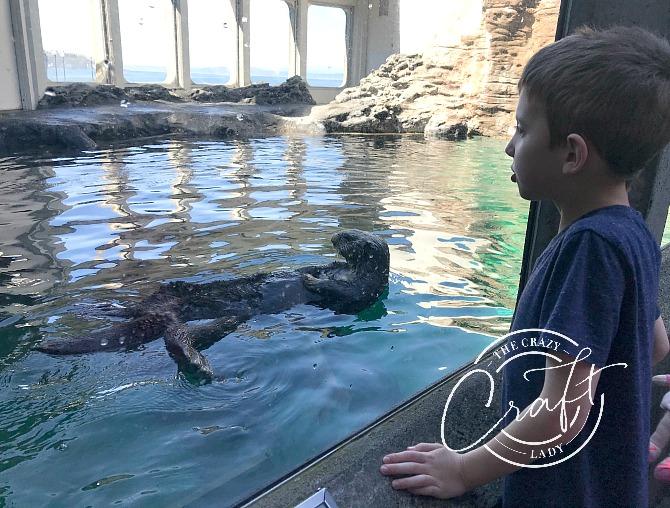 Sea Otters at the Seattle Aquarium
