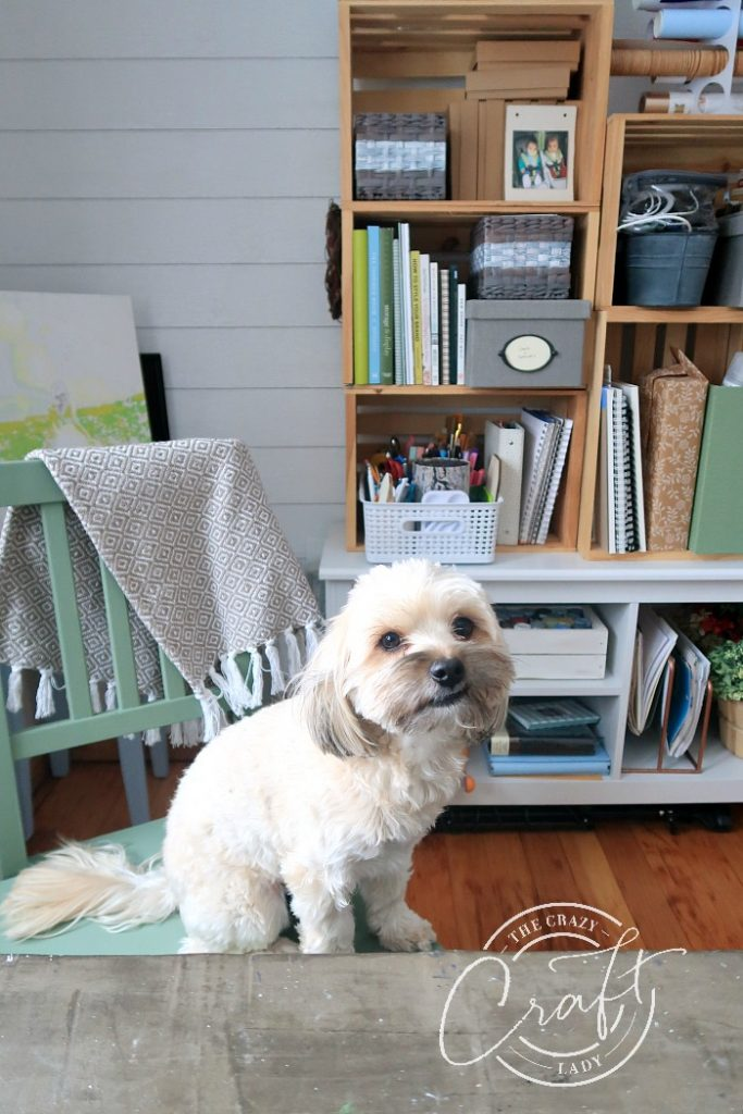 Dog sitting at my craft desk